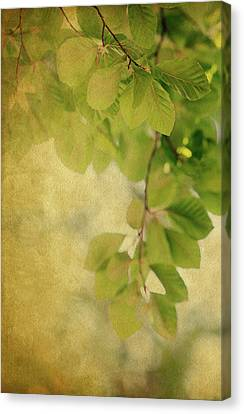 Canvas Print featuring the photograph Golden by Rebecca Cozart