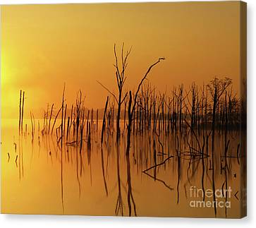 Golden Reflections Canvas Print by Roger Becker