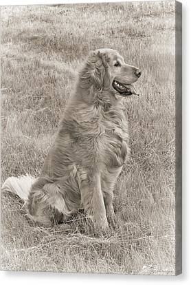 Golden Retriever Dog Sepia Canvas Print by Jennie Marie Schell
