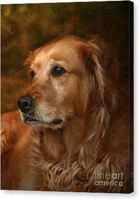 Golden Retriever Canvas Print by Jan Piller