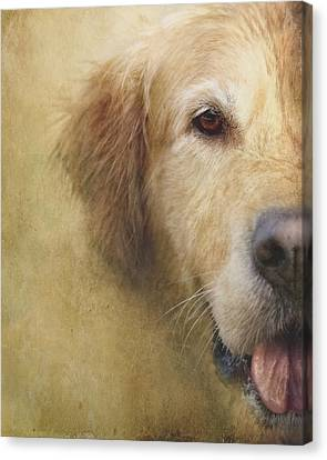 Golden Retriever Portrait 1 Canvas Print by Wolf Shadow  Photography