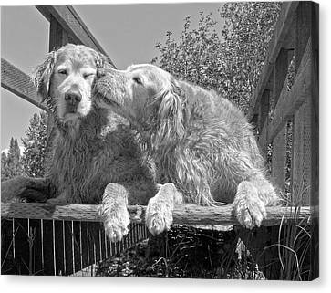 Golden Retrievers The Kiss Black And White Canvas Print by Jennie Marie Schell