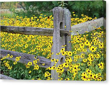 Golden-rod  Crowd Out Canvas Print