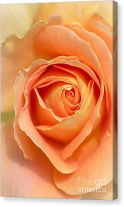 Golden Rose Canvas Print by Ana V Ramirez
