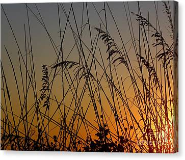 Canvas Print featuring the photograph Golden Sea Oats by Terri Mills