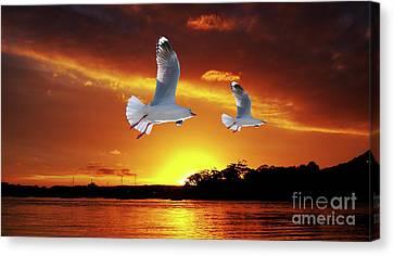 Golden Seagull Ocean Sunset. Original Exclusive Photo Art. Canvas Print by Geoff Childs