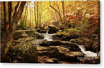 Golden Serenity Canvas Print by Rebecca Davis
