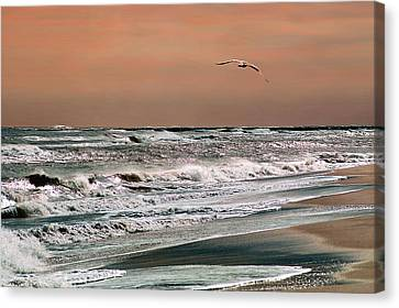 Golden Shore Canvas Print by Steve Karol