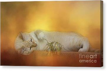 Flame Point Siamese Canvas Print - Golden Siamese by Elisabeth Lucas