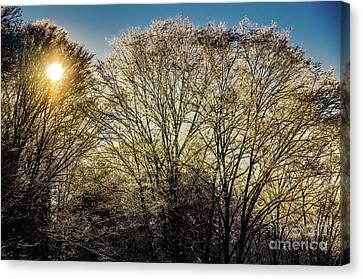 Golden Snow Canvas Print