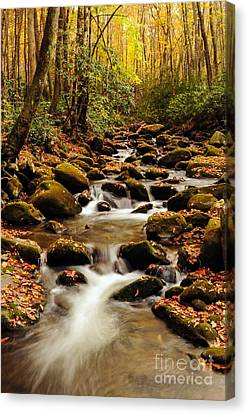 Canvas Print featuring the photograph Golden Stream In The Great Smoky Mountains by Debbie Green