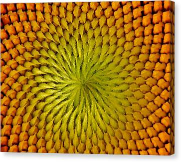 Canvas Print featuring the photograph Golden Sunflower Eye by Chris Berry