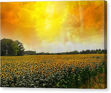Golden Sunflowers Of Nimes Canvas Print