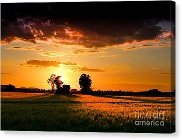 Cornfield Canvas Print - Golden Sunset by Franziskus Pfleghart