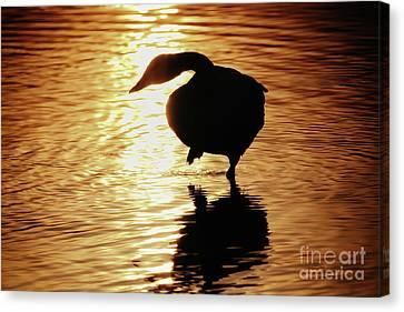 Golden Swan Canvas Print