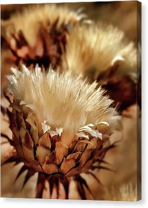 Canvas Print featuring the digital art Golden Thistle II by Bill Gallagher