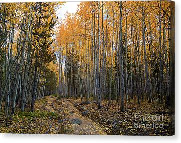 Golden Trail Canvas Print by Barbara Schultheis