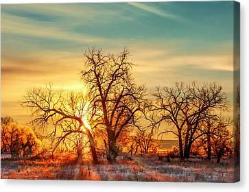 Dappled Light Canvas Print - Golden Trees by Todd Klassy