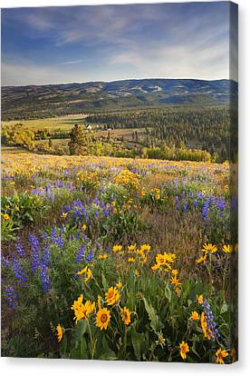 Foothills Canvas Print - Golden Valley by Mike  Dawson