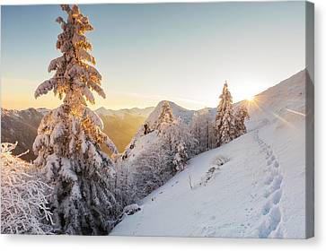 Golden Winter Canvas Print by Evgeni Dinev
