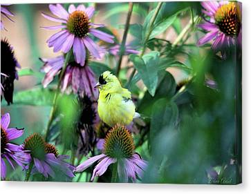 Goldfinch On Coneflowers Canvas Print