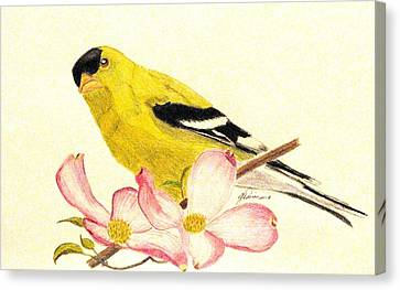 Goldfinch Spring Canvas Print by Angela Davies