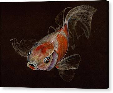 Canvas Print featuring the drawing Goldfish by Heidi Kriel