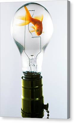 Clever Canvas Print - Goldfish In Light Bulb  by Garry Gay