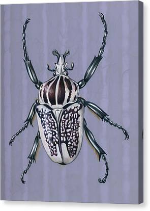 Goliath Beetle Canvas Print by Mindy Lighthipe