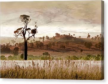 Gondwana Boab Canvas Print by Holly Kempe