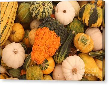 Good Gourd Canvas Print