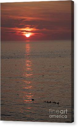 Good Morning Ducks Canvas Print