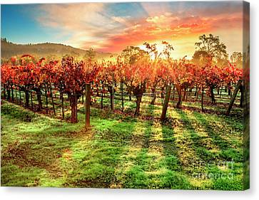 Grape Vines Canvas Print - Good Morning Napa by Jon Neidert