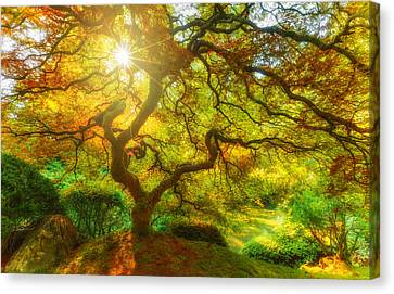 Good Morning Sunshine Canvas Print by Darren  White