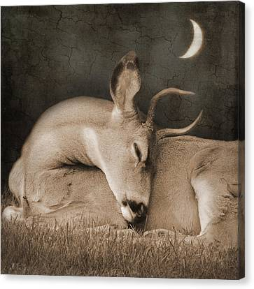 Canvas Print featuring the photograph Goodnight Deer by Sally Banfill