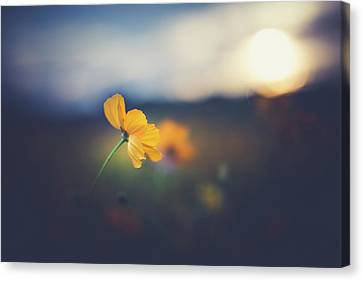 Canvas Print featuring the photograph Goodnight Sun by Shane Holsclaw