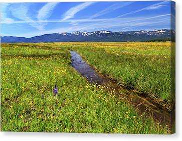 Canvas Print featuring the photograph Goodrich Creek by James Eddy