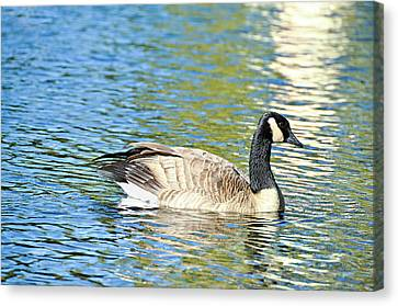 Canvas Print featuring the photograph Goose And Sun Reflections by David Lawson