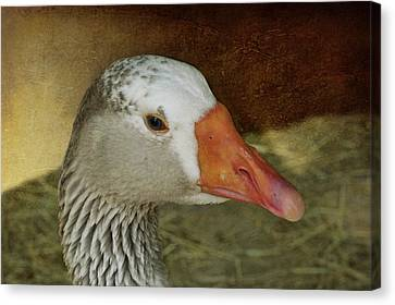 Goose - Domestic Greylag Canvas Print by Nikolyn McDonald