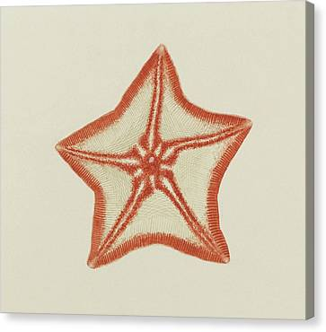 Goose Foot Starfish Canvas Print by Philip Henry Gosse