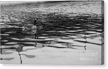 Goose In Black And White Canvas Print