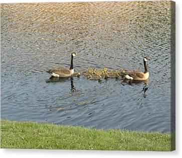 Goose Pond 1 Canvas Print by Nancy Ferrier