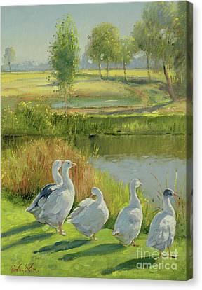 Gooseguard Canvas Print by Timothy Easton