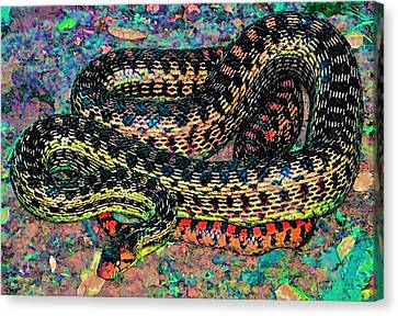 Gopher Snake Canvas Print by Pamela Cooper