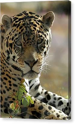 Gorgeous Jaguar Canvas Print by Sabrina L Ryan
