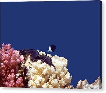 Gorgeous Red Sea World 4 Canvas Print