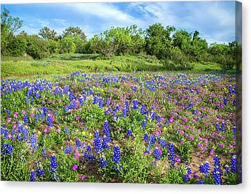 Gorgeous Wildflowers On The Willow City Loop Canvas Print by Lynn Bauer