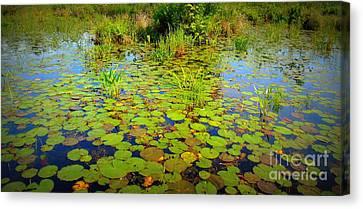 Gorham Pond Lily Pads Canvas Print by Susan Lafleur