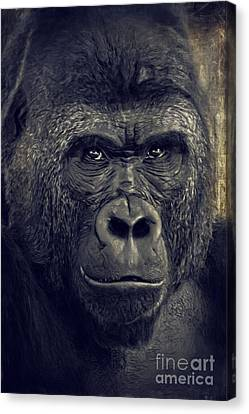 Gorilla Canvas Print by Angela Doelling AD DESIGN Photo and PhotoArt