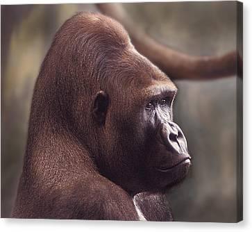 Gorilla Portrait Canvas Print by Greg Slocum